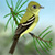 Pacific-slope Flycatcher_CEIcon