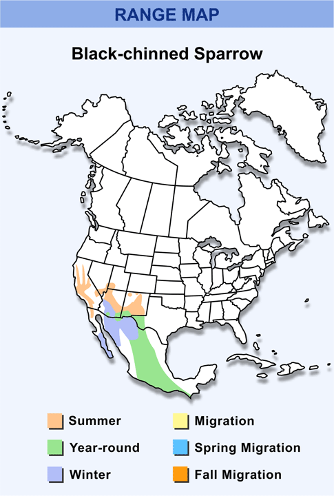 Range Map for Black-chinned Sparrow HD
