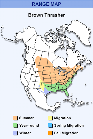 Range Map for Brown Thrasher HD