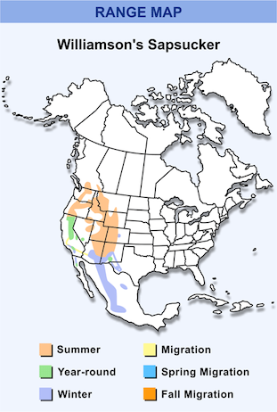 Range Map for Williamson's Sapsucker HD