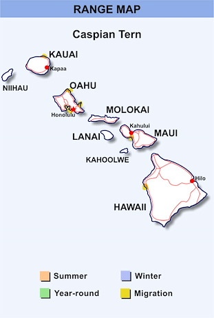Range Map Hawaii for Caspian Tern
