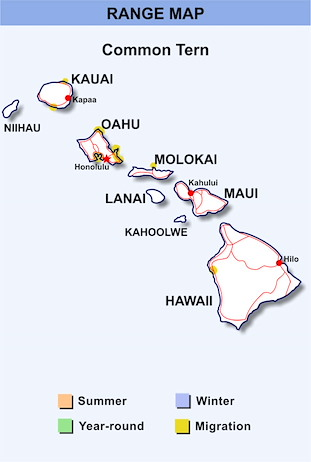 Range Map Hawaii for Common Tern