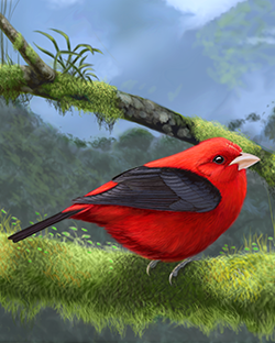 Scarlet Tanager Thumbnail Largest